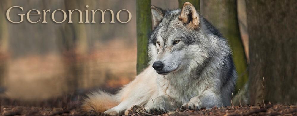 indianer wolf geschichte